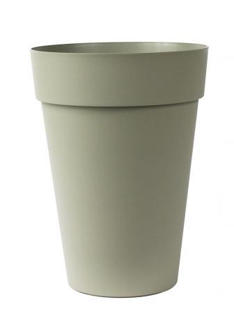 liken vaso rosmarino