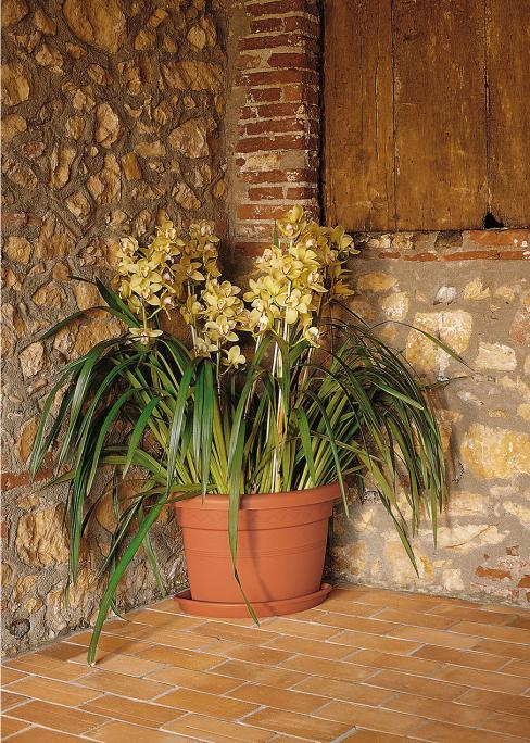 abbinato a Orchidea cymbidium