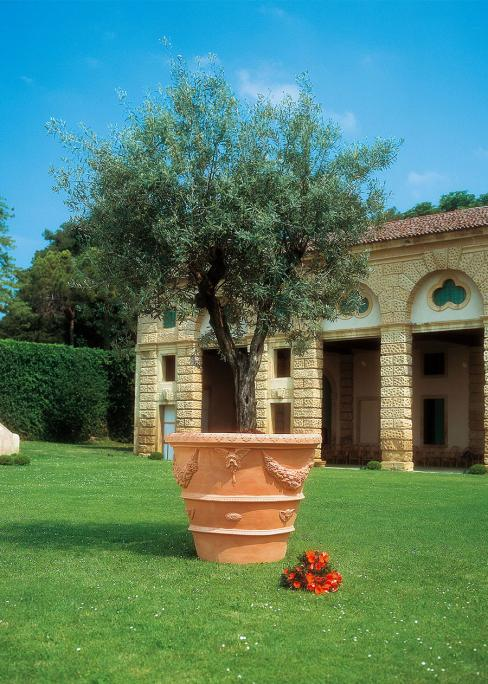 combined with Olive tree