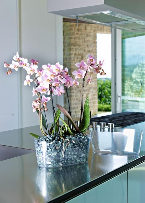 abbinato a Orchidea