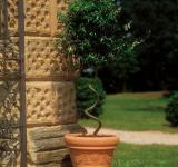 combined with form of Pyracantha with twisted trunk